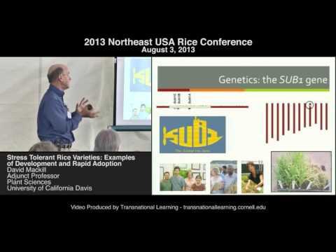 David Mackill - Stress Tolerant Rice Varieties: Examples of Development and Rapid Adoption