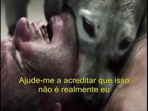 Three Days Grace-Animal I Have Become Tradução (Video não oficial)