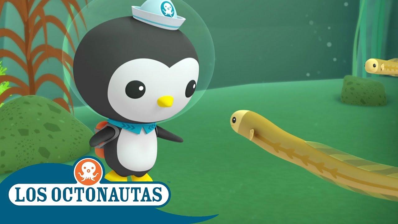 Los Octonautas Oficial en Español - El viaje de una Anguila | Compilación