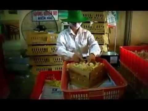 Chuyên gia Nguyễn Lân Hùng nói về phương ghi chép , hạch toán chăn nuôi gà  J -  DABACO