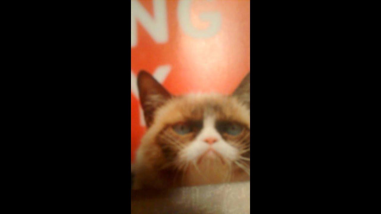 Grumpy Cat Death Not Really Dead YouTube