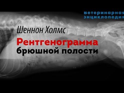 Рентгенограмма брюшной полости. Abdominal Radiographs