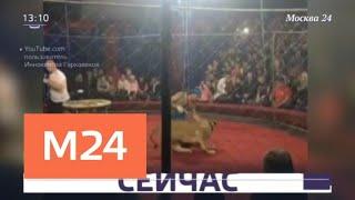 Девочку, на которую напала цирковая львица на Кубани, прооперировали - Москва 24
