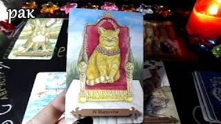 Гороскоп на неделю с 18 по 24 февраля 2019 года на картах ТАРО Мистических кошек!