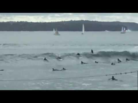 Surfing - Neilson Park Sydney Harbour