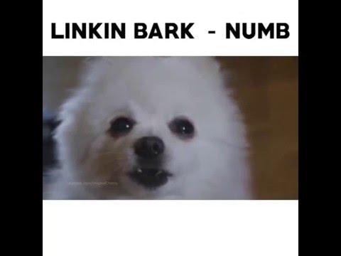 Linkin Bark - Numb