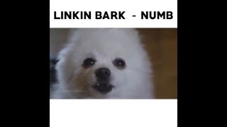 Linkin Bark - Numb