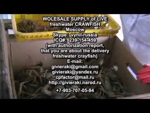 Crayfish for sale - live freshwater crayfish ga 150g -1kg=8,5 Euro