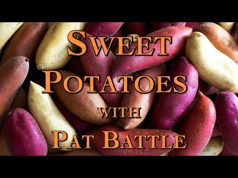 Sweet Potatoes with Pat Battle