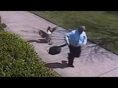 Hilarious Moment Cop gets Attacked by an Angry GOOSE!