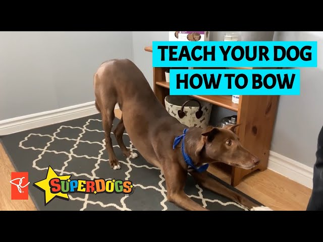 SuperDogs | Teach Your Dog How To Bow | Dog Training