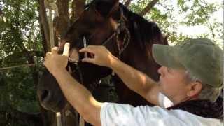 Horse Eye Wash & Care - Human Medicine vs Equine -Part 2 - Rick Gore Horsemanship