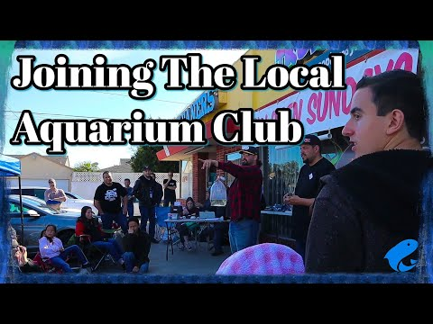 Southern California Scape Club Meet @Nautilus Fish Store In Lakewood,CA