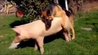 Funny animal love so human mating || Top 10 animal mating funny complication