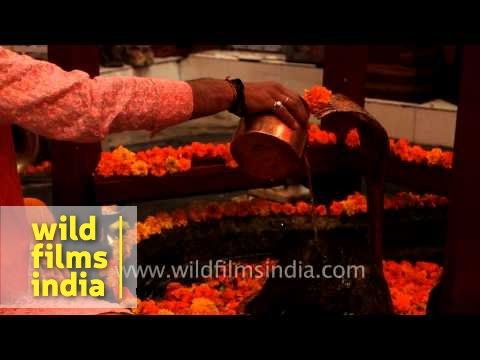 Priest recite mantra while offering water on the Lingam of Kamleshwar Mahadev temple