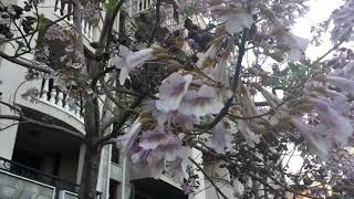 Загадочные деревья которые цветут в Болгарии - Каскадас 2019
