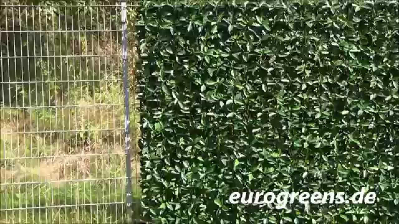 Eurogreens Kirschlorbeer Heckenpaneele Youtube