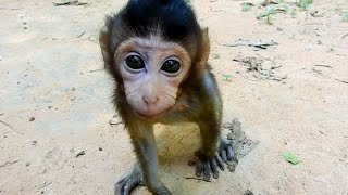 So funny baby Nelson reaction to Camera | Cute acting moments of monkeys baby playing around
