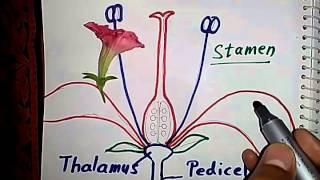 BSC III Sem unit4 flower structure