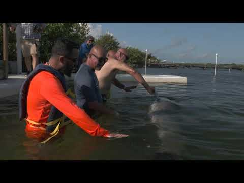 Wounded Warriors Find Therapy In Dolphins and Florida Keys Motorcycle Ride