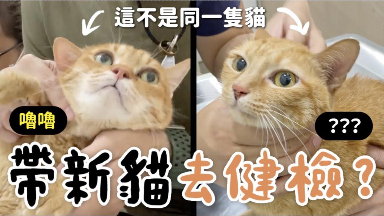 【黃阿瑪的後宮生活】帶新貓去健檢?