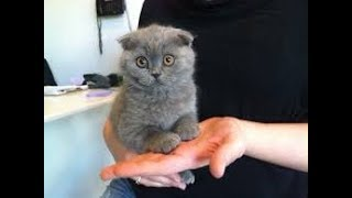 🐱Cutest Cats! Cute is Not Enough   FUNNY CATS! 2018🐱