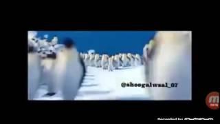رقص بطاريق على اغنيه هب باردو وزانت نفسيه 2016 Youtube