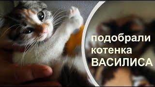 КОТЕНОК ОБРЕЛ СЧАСТЬЕ Наши трехцветные кошки