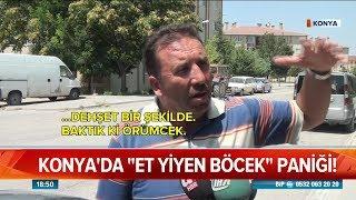 """Konya'da """"et yiyen böcek"""" paniği - Atv Haber 9 Ağustos 2018"""