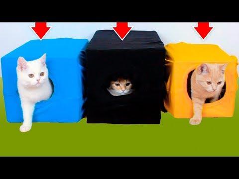 10 Nápadů Pro Uspořádání Života Kočky