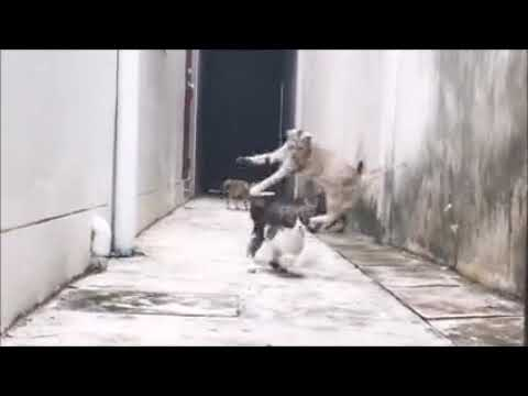 Funny Cats Jumping