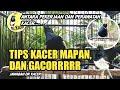 Tips Kacer Gacor Dan Mapan Dr Kacer Menjawab Pemahaman Masalah Kacer  Mp3 - Mp4 Download