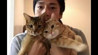 アメトークで紹介された徳井義実の猫ミコライオとエルドレッドの種類 ...