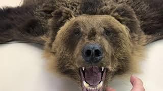 Ковёр из шкуры медведя-обзор