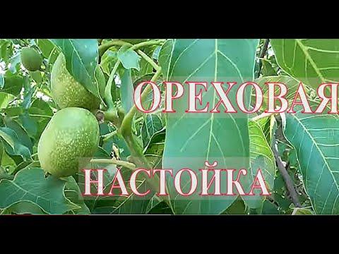 Настойка Зеленого Грецкого Ореха: применение, лечение, купить.
