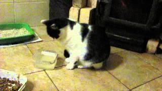 Кошка пьет воду лапой ))
