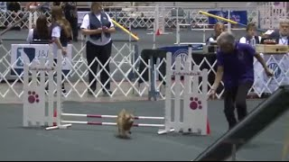 Agility - Standard Class - 4/8 Inches