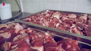 Первая кухня для собак в Москве