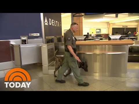 COVID-Sniffing Dogs Test Passengers At Helsinki Airport | TODAY