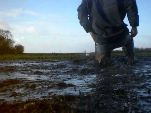 Image result for wading in manure