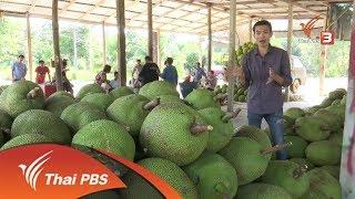 อาชีพทั่วไทย : ปลูกขนุนขายได้ราคาสูง (17 พ.ย. 60)