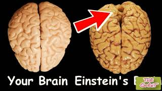 See how neurons of your brain dies everyday 🤨🤨🤨 and amazing facts