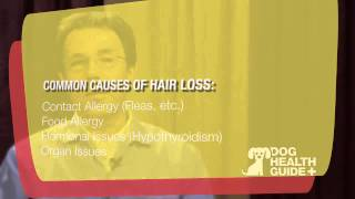 Causes and Treatment of Dog Hair Loss