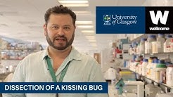Dissection of a Kissing Bug  and Chagas Disease