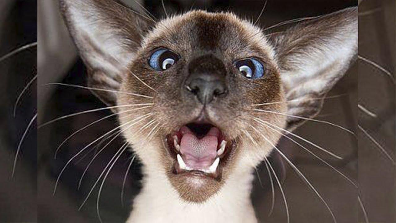 Мяуканье кошки видео для котов