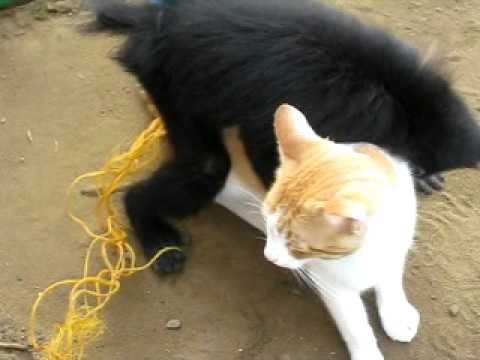 nike a scratch homme et femme accouplement animaux