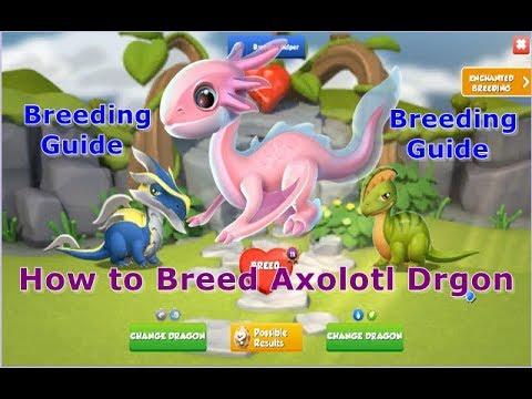 How to Breed AXOLOTL Dragon-Dragon Mania legends | Dragon of The Week AXOLOTL Dragon | DML | HD