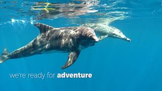 Utila Dive Center Reopens On October 1st!