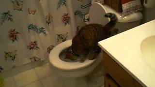 Potty-Trained Cat