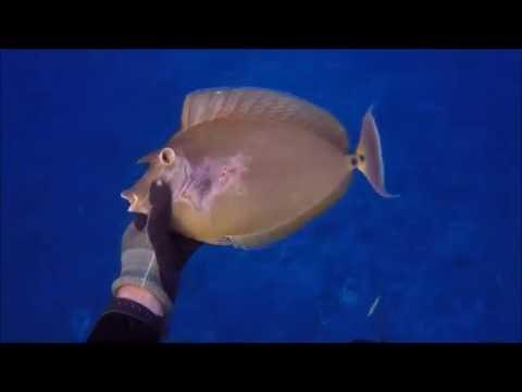spearfishing french polynesia july 2K16